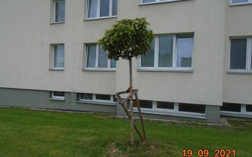 niceni_stromu_zari_2021_1.jpg